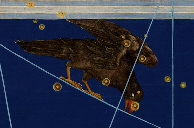 Corvus, The Crow