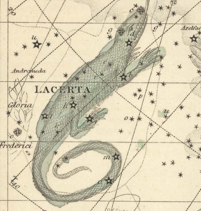 Lacerta, The Lizard