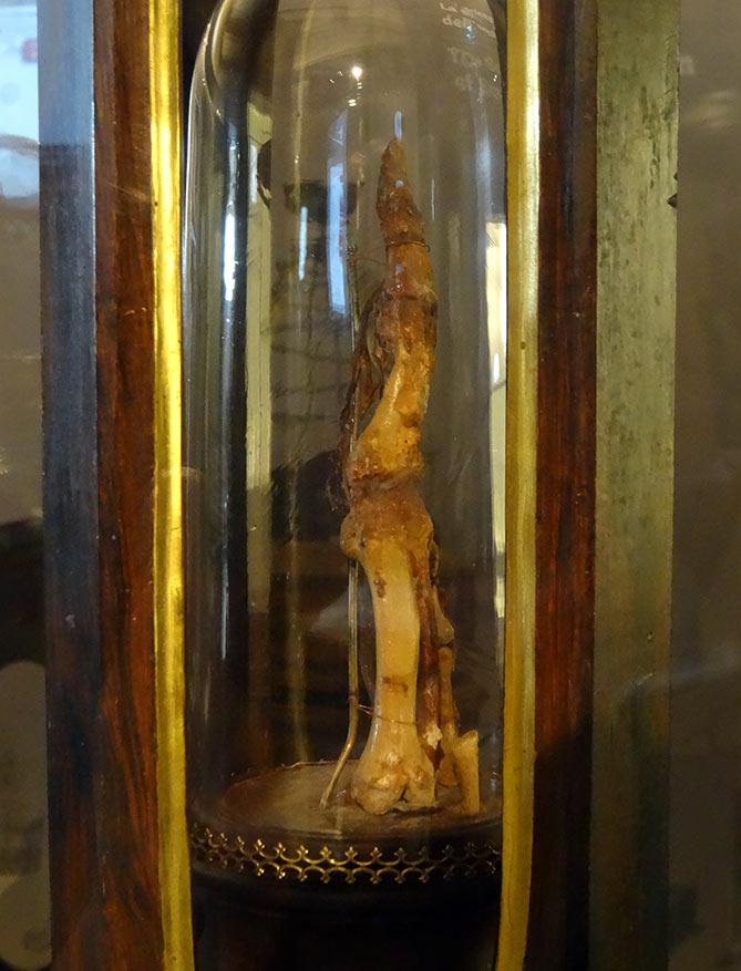 Galileo's Index Finger Bones