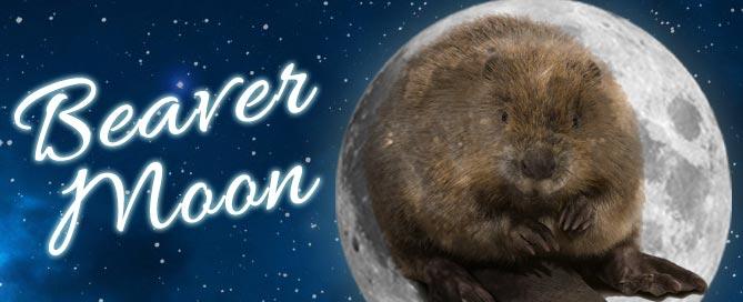 Full Beaver Moon