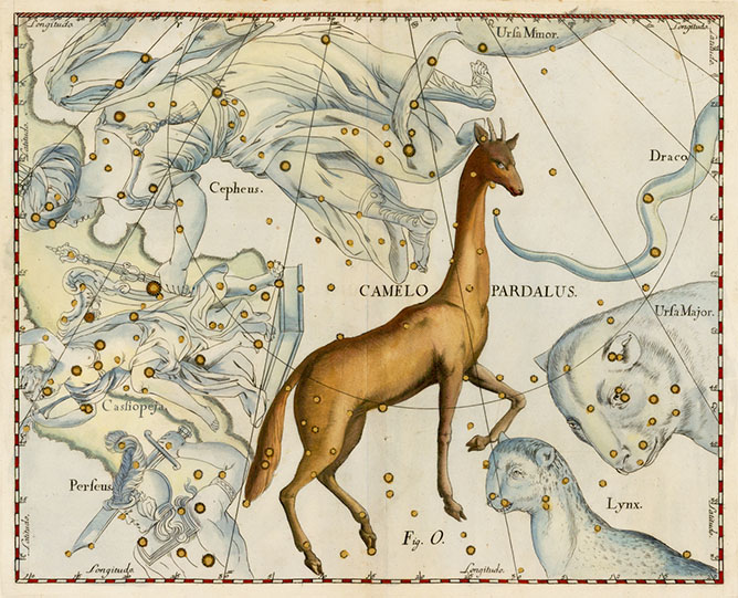 Camelopardalis, The Camel