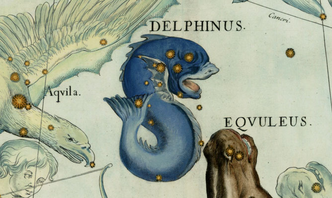 Delphinus, The Dolphin