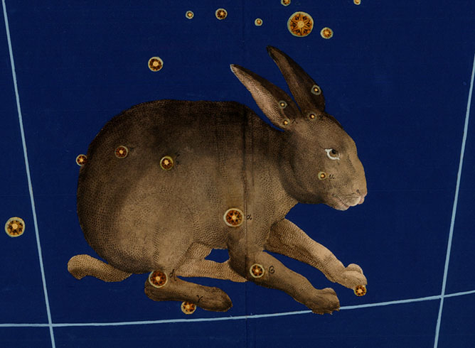 Lepus, The Hare