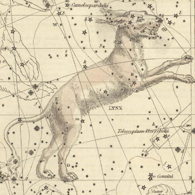 Lynx, The Lynx