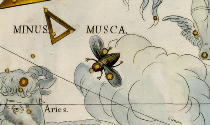Musca, The Fly